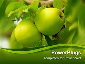 Two green apples suspended on a tree powerpoint design layout