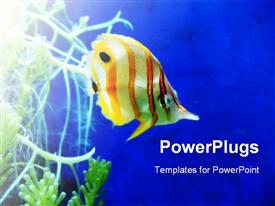 Yellow and white stripy tropical fish  - background design about underwater