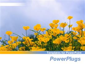 Low angle of yellow flowers in the pastel blue sky template for powerpoint