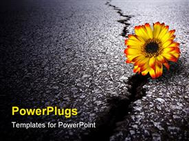 PowerPoint template displaying a depiction of a sunflower on a cracked road