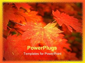 PowerPoint template displaying autumn maple leaves soft macro fall red forest