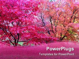 PowerPoint template displaying pink Japanese maple trees in fall autumn season with pink wave border