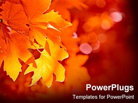 PowerPoint template displaying leaves have turned a beautiful array of fall colors in the background.