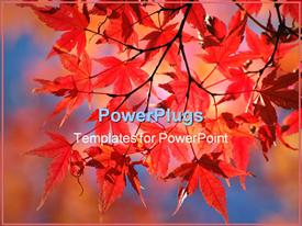 PowerPoint template displaying red Japanese maple in the background.