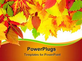 PowerPoint template displaying a beautiful collection of various colored leaves with white background