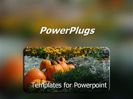 PowerPoint template displaying pumpkins in a pumpkin patch with wild flowers