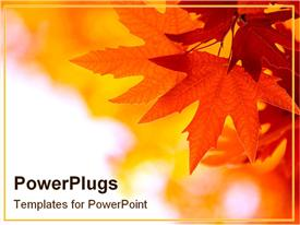 PowerPoint template displaying autumn strikes as the trees become golden