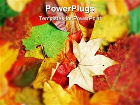 PowerPoint template displaying fall background with a variety of different types shapes and colors of leaves in the background.