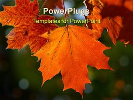 PowerPoint template displaying maple leaf