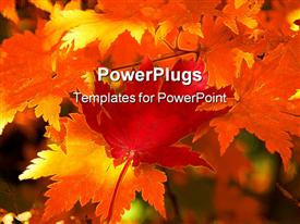 PowerPoint template displaying red maple leaf on the yellow leaves as a background