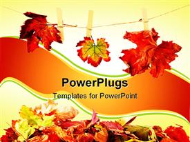 PowerPoint template displaying three different autumn leaves hanged on the clothesline in the background.