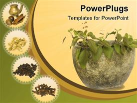 PowerPoint template displaying holy Basil Tulasi in stone bowl with spices and oil in the background.