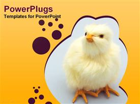 PowerPoint template displaying yellow baby chicken sitting on a blue background