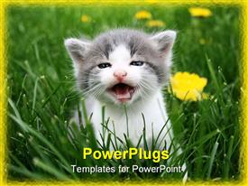 First time this little cat was outside in the grass powerpoint template