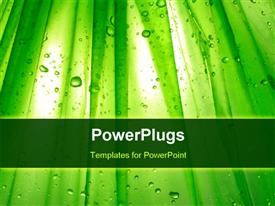 PowerPoint template displaying green plants with a lot of water droplets