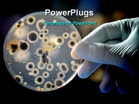 PowerPoint template displaying hands in surgical glove holding petri dish with bacteria culture