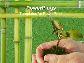 PowerPoint template displaying hands holding young tree plant with bamboo stick borders on green grass background