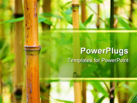 PowerPoint template displaying bamboo canes with green leaves in a nature background