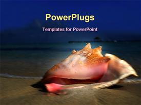 PowerPoint template displaying conch shell seashell beach, vacation, travel, island, holiday