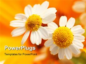 PowerPoint template displaying close-up of white flower over orange blurry background