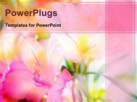 PowerPoint template displaying a number of flowers with pinkish background and place for text