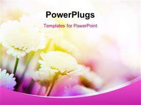 PowerPoint template displaying beautiful flowers on pink themed background
