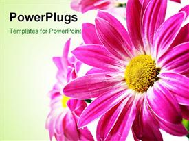 PowerPoint template displaying a beautiful flower with greenish background