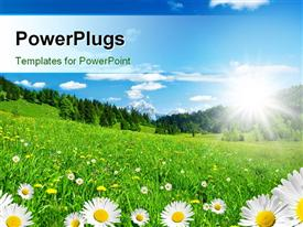 PowerPoint template displaying a number of flowers with clear sky in background