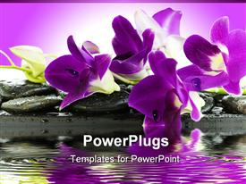 PowerPoint template displaying beautiful  purple and white orchids on rocks by a pond with purple background orchid scent