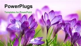 PowerPoint template displaying a number of purple flowers with a blurred background