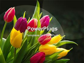 PowerPoint template displaying tulips