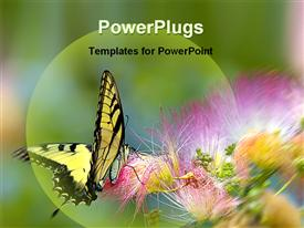 PowerPoint template displaying butterfly on a flower