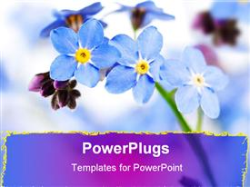 PowerPoint template displaying close up of purple forget me not flowers, purple streak border