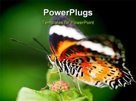 PowerPoint template displaying butterfly sucking nectar of flower in green garden