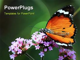 PowerPoint template displaying butterfly macro insect and wildlife nature plant