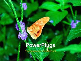 PowerPoint template displaying butterfly perches on purple flower of green plant on black background