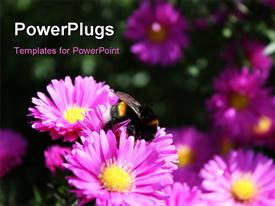 PowerPoint template displaying lots of purple colored flowers with a bee on it