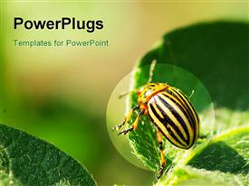 PowerPoint template displaying colorado beetle on a potato green leaf in the background.