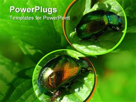 PowerPoint template displaying two Japanese beetles on green leaves with green background
