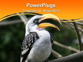 PowerPoint template displaying white and black bird with large beak open