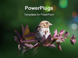 PowerPoint template displaying chipping Sparrow on a branch with a green background