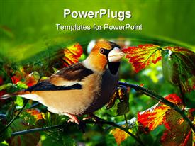 PowerPoint template displaying grosbeak perched on a birdfeeder close up depiction