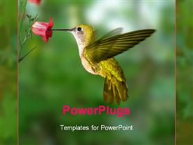 PowerPoint template displaying yellow green hummingbird drinks nectar from pink flower