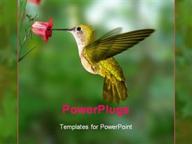 Hummingbird flying powerpoint design layout