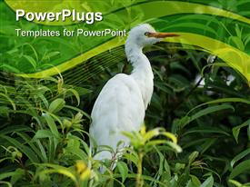 PowerPoint template displaying white bird with orange beak sitting in a tree