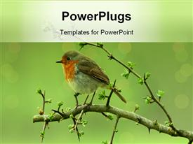 Birds_0403 powerpoint theme