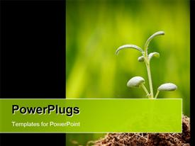 PowerPoint template displaying a beautiful plant with blurred background