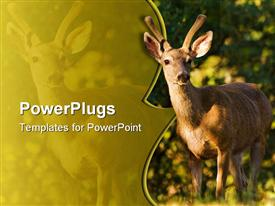 PowerPoint template displaying brown black tail buck standing in its natural habitat