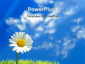 PowerPoint template displaying a day time view of a single white flower