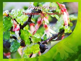 PowerPoint template displaying close-up of early spring gooseberry blossoms in the snow